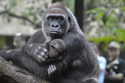 melo_gorilla.jpg